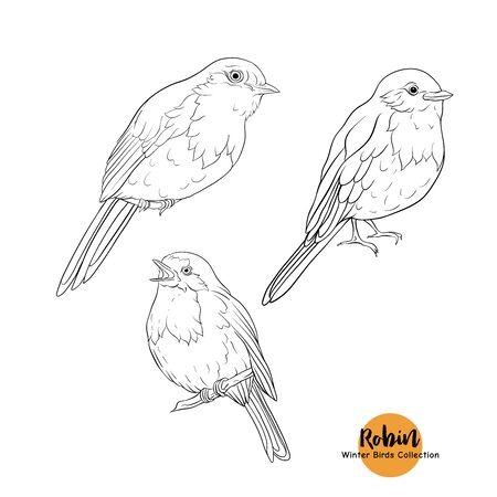 Robin bird - a symbol of Christmas. Set of elements for design Isolated on white background. Realistic sketch drawing. Outline hand drawing vector illustration.. Stock Illustratie