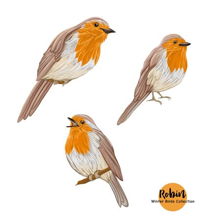 Robin bird - a symbol of Christmas. Set of elements for design Isolated on white background..
