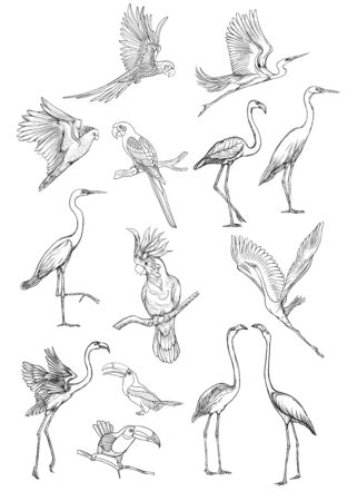 Set of tropical birds. Stickers, elements for design. Outline hand drawing vector illustration. Isolated on white background. Illustration