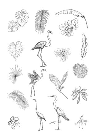 Set of tropical plans, flowers and birds. Stickers, elements for design. Outline hand drawing vector illustration. Isolated on white background. Stock Vector - 133011356