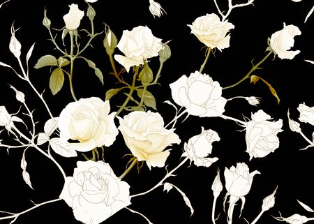 White roses seamless pattern. Isolated on black background. Colored and outline design. Vector illustration.