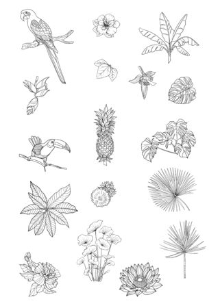 Set of tropical plans, flowers and birds. Stickers, elements for design. Outline hand drawing vector illustration. Isolated on white background. Stock Vector - 133011061