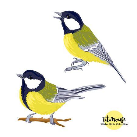 Pájaros tit: un símbolo del invierno. Conjunto de elementos de diseño aislado sobre fondo blanco.