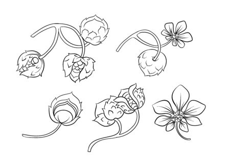 Hazelnut color illustration in art nouveau style, vintage, old, retro style. Outline hand drawing vector illustration.