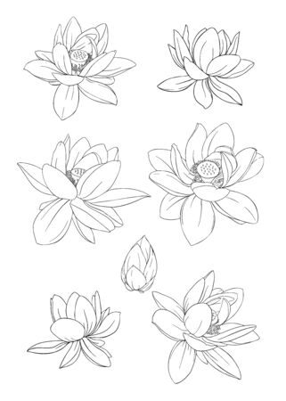 Lotus flower set. Outline hand drawing vector illustration. Isolated on white background..