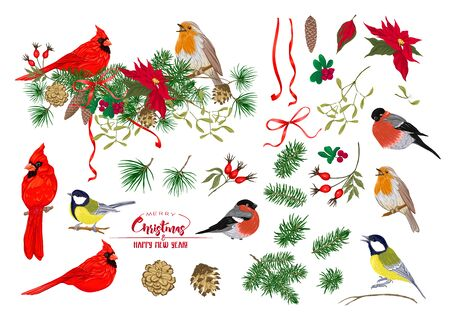 Pájaro tit, pájaro Robin, pájaro cardenal, camachuelo. Corona de Navidad de abeto, pino, flor de pascua, rosa de perro, abeto. Conjunto de elementos para el diseño Ilustración de vector de color. Aislado sobre fondo blanco. . Ilustración de vector