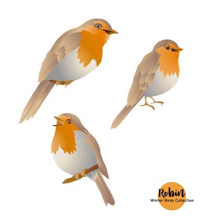 Pájaro petirrojo: símbolo de la Navidad. Conjunto de elementos de diseño aislado sobre fondo blanco.