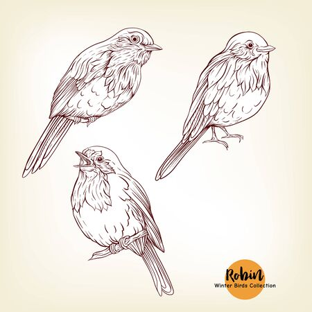 Robin bird - a symbol of Christmas. Set of elements for design Isolated on white background. Realistic sketch drawing. Graphic drawing, engraving style. Vector illustration.. Фото со стока - 133001648