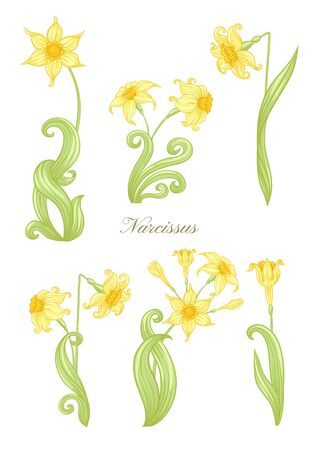 Narcissus. Set of elements for design Colored vector illustration. In art nouveau style, vintage, old, retro style. In soft yellow colors. Isolated on white background.. 矢量图像