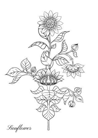 Sunflower. Set of elements for design Vector illustration. Outline hand drawing in art nouveau style, vintage, old, retro style. Çizim