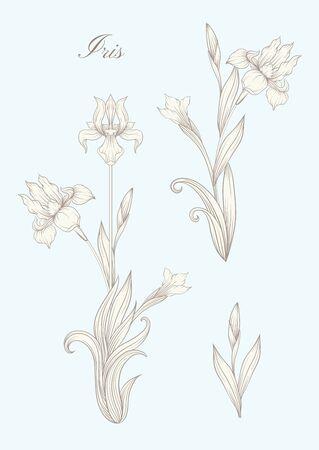 Iris flower, fleur-de-lis, flower-de-luce, flag. Element for design. In art nouveau style, vintage, old, retro style. In botanical style In vintage blue and beige colors..