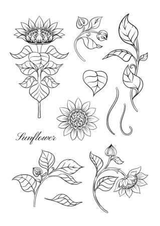 Sunflower. Set of elements for design Vector illustration. Outline hand drawing in art nouveau style, vintage, old, retro style. Vettoriali