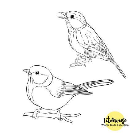 Pájaros tit: un símbolo del invierno. Conjunto de elementos de diseño aislado sobre fondo blanco. Dibujo de boceto realista. Ilustración de vector de dibujo a mano de contorno.