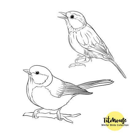 Tit birds - a symbol of winter. Set of elements for design Isolated on white background..Realistic sketch drawing. Outline hand drawing vector illustration..