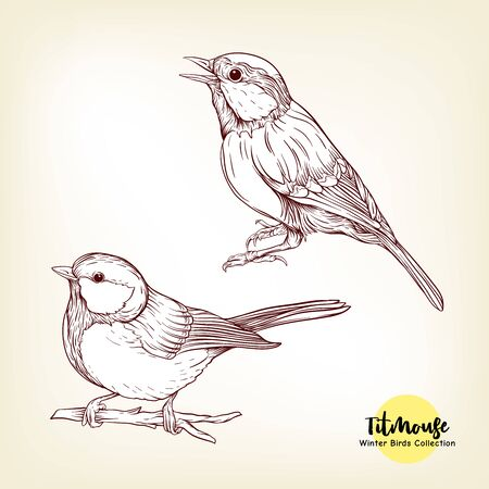 Tit birds - a symbol of winter. Set of elements for design Isolated on white background..Realistic sketch drawing. Graphic drawing, engraving style. Vector illustration.. Фото со стока - 133099447