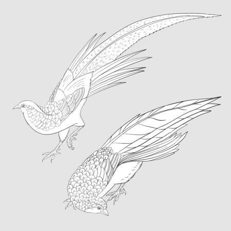 Pheasant, bird. Set of elements for design. Outline hand drawing vector illustration. 向量圖像