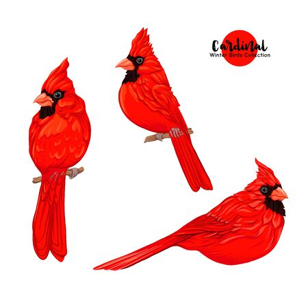 Cardinal birds - a symbol of Christmas. Set of elements for design Isolated on white background..