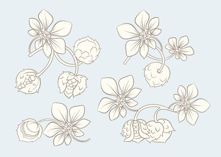 Hazelnut illustration in art nouveau style, vintage, old, retro style. In vintage blue and beige colors. Vector illustration Illustration