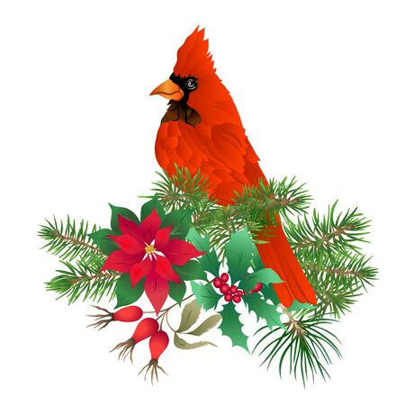Cardinal bird - the symbol of Christmas. Christmas wreath of winter plants. Element for design. Colored vector illustration. Isolated on white background.. 向量圖像