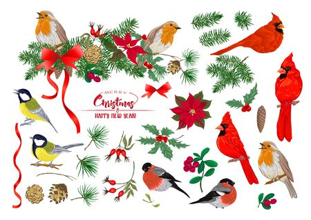 Tit bird, Robin bird, Cardinal bird, Bullfinch. Christmas wreath of spruce, pine, poinsettia, dog rose, fir. Set of elements for design Colored vector illustration. Isolated on white background. . 向量圖像