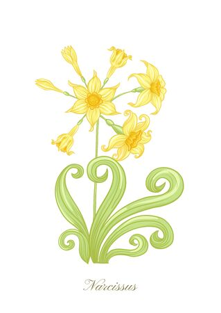 Narcissus. Set of elements for design Colored vector illustration. In art nouveau style, vintage, old, retro style. In soft yellow colors. Isolated on white background.. 向量圖像