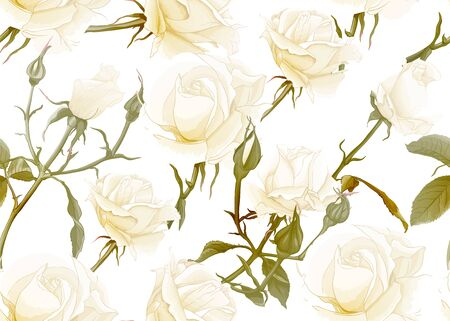 White roses seamless pattern. Isolated on white background. Vector illustration. Standard-Bild - 133466739