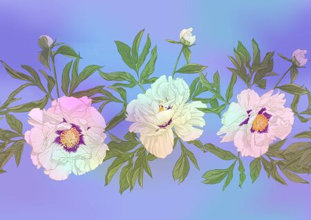 Flores de peonía blanca. Patrón sin costuras, fondo. Ilustración de vector de color. En estilo botánico En colores pastel ultravioleta claros sobre fondo azul y rosa de malla