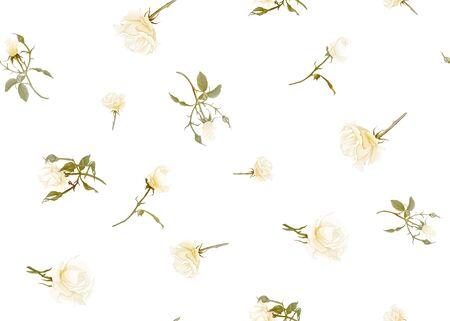 White roses seamless pattern. Isolated on white background. Vector illustration. Standard-Bild - 133466810
