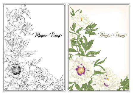 White Peony. Coloring page for the adult coloring book. with colored sample. Colored and outline design. Vector illustration. Isolated on white background Çizim