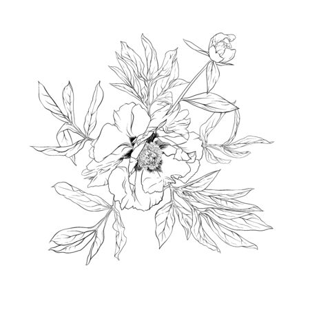 Peony flower. Element for design. Outline hand drawing vector illustration. In botanical style Isolated on white background.. Banco de Imagens - 133734440