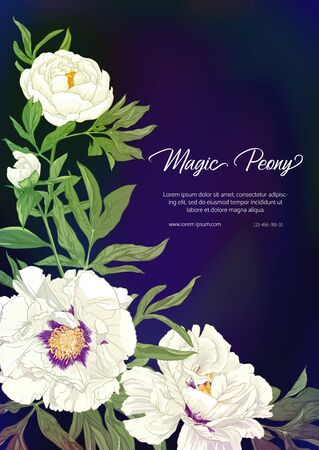 White Peony. Template for wedding invitation, greeting card, banner, gift voucher, label. Colored vector illustration. On black, dark blue background. Banco de Imagens - 133734482