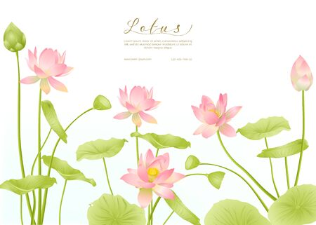 Lotus flowers. Template for wedding invitation, greeting card, banner, gift voucher with place for text. Colored vector illustration. Stock Vector - 133734512