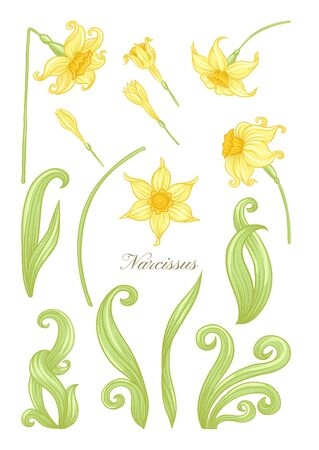Narcissus. Set of elements for design Colored vector illustration. In art nouveau style, vintage, old, retro style. In soft yellow colors. Isolated on white background.. Illustration