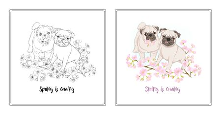 Pug dogs with blooming sakura spring flowers. Vector illustration. Outline hand drawing. Coloring page for theadult coloring book with colored sample. Çizim