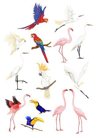 Zestaw tropikalnych ptaków. Naklejki, elementy do projektowania ilustracji wektorowych. Na białym tle. Ilustracje wektorowe