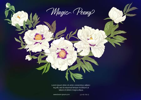 White Peony. Template for wedding invitation, greeting card, banner, gift voucher, label. Colored vector illustration. On black, dark blue background. Çizim