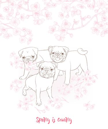 Pug dogs with blooming sakura spring flowers. Vector illustration. Outline hand drawing. Çizim