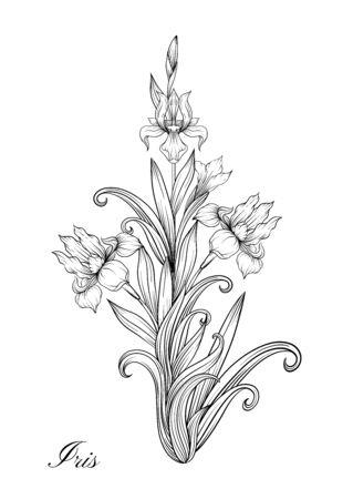 Iris flower, fleur-de-lis, flower-de-luce, flag. Element for design. Outline hand drawing vector illustration. In art nouveau style, vintage, old, retro style. In botanical style. Çizim
