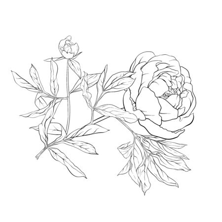 Fiore di peonia. Elemento per il design. Illustrazione di vettore del disegno a mano di contorno. In stile botanico Isolato su sfondo bianco..