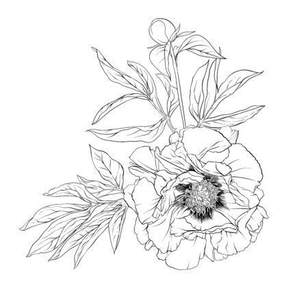 Flor de peonía. Elemento de diseño. Ilustración de vector de dibujo a mano de contorno. En estilo botánico aislado sobre fondo blanco. Ilustración de vector