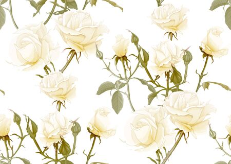 White roses seamless pattern. Isolated on white background. Vector illustration. Illustration