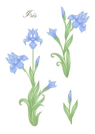 Iris, fleur-de-lis, flower-de-luce, flag color illustration In art nouveau style, vintage, old, retro style. Vector illustration.