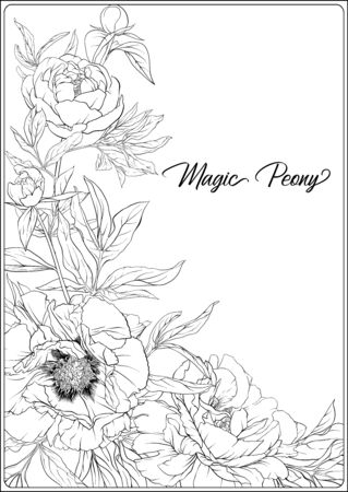 White Peony. Coloring page for the adult coloring book. Outline hand drawing vector illustration. Isolated on white background. Ilustracja
