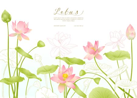 Lotus flowers. Template for wedding invitation, greeting card, banner, gift voucher with place for text. Colored and outline design. Vector illustration. Illustration