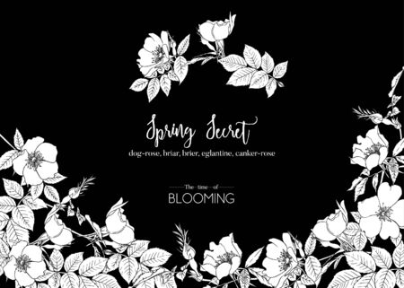 Dog-rose, briar, brier, eglantine, canker-rose. Template for wedding invitation, greeting card, banner, gift voucher. Graphic drawing. Vector illustration in black and white.