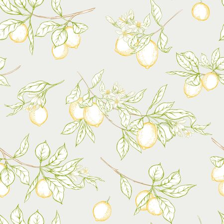 Lemon tree branch with lemons, flowers and leaves. Seamless pattern, background. Outline colored hand drawing vector illustration in soft colors on grey background..