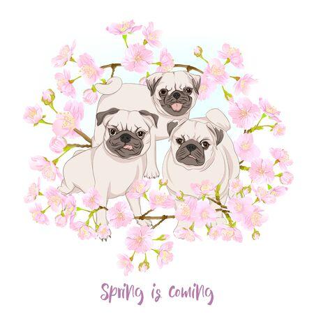 Pug dogs with blooming sakura spring flowers. Vector illustration. Çizim