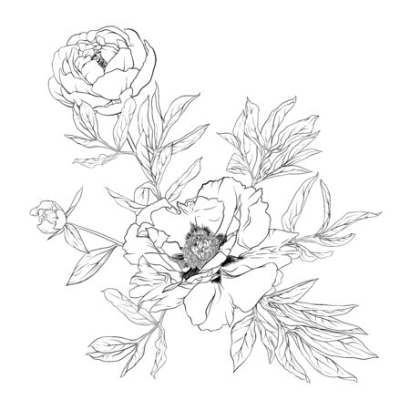 Peony flower. Element for design. Outline hand drawing vector illustration. In botanical style Isolated on white background.. Banco de Imagens - 133737002