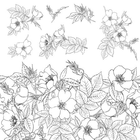 Seamless pattern, background with dog-rose, briar, brier, eglantine, canker-rose . Template for wedding invitation, greeting card, gift voucher. Graphic outline drawing, Vector illustration. Ilustracja
