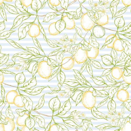Lemon tree branch with lemons, flowers and leaves. Seamless pattern, background. Outline colored hand drawing vector illustration in soft colors on blue stripes background.. Ilustrace